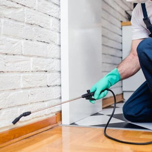 Commercial pest control Commercial Cleaning and Facilities Maintenance